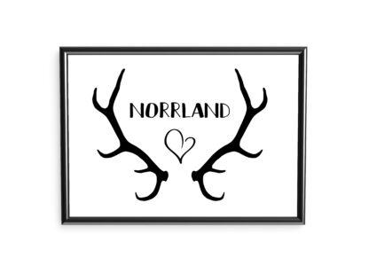 poster norrland renhorn
