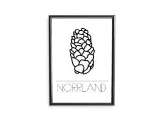 poster norrland kotte