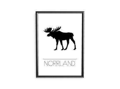 poster norrland älg
